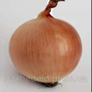 Семена лука Эталон Голд 0,5 кг. Enza Zaden