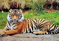 """Набор на подрамнике картина стразами полной выкладки """"Королевский тигр"""" Размер: 40*50 см Код 198488"""