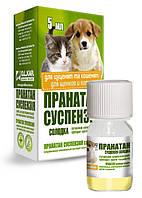 Пранатан суспензия сладкая для щенков и котят 5 мл (аналог Празицид суспензия)