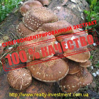 Шиитаке (экстракт 50% β-глюканов) - realty-investment.com.ua в Черкассах