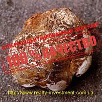 Пория кокосовидная (экстракт 50% β-глюканов), фото 1