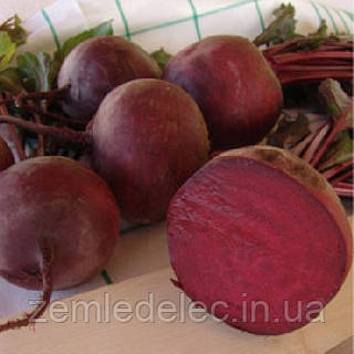 Семена свеклы Моника 1 кг Тирас (Moravoseed)
