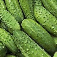Семена огурца Авелла F1 (Аваланж) 500 сем. самоопыл. Професійне насіння