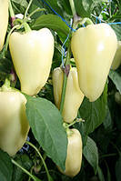 Семена перца Хаски E49.38020 F1 500 сем. Enza Zaden
