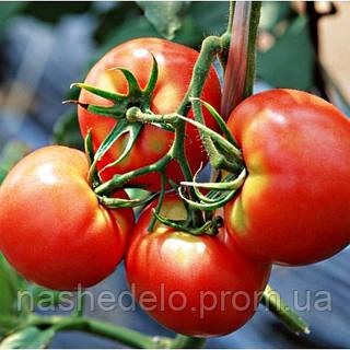 Семена томата Дар Заволжья F1 1 гр. Элитный ряд