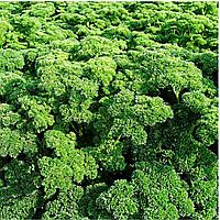 Семена петрушки кудрявой Астра 1 кг Moravoseed