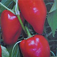 Семена сладкого перца Кирилл 2 гр. Элитный ряд