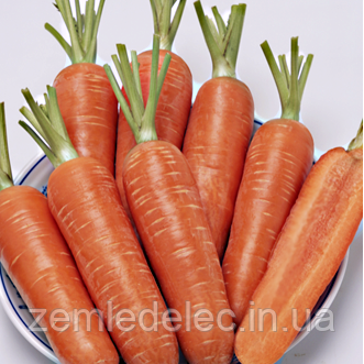 Семена моркови Проминенс морковь 100 000 сем. Enza Zaden