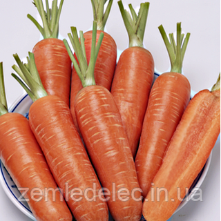Семена моркови Проминенс F1 100 000 сем. TAKI SEED