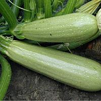 Семена кабачка-цуккини Алия F1 100 сем. Професійне насіння