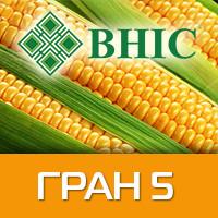 Кукуруза Гран 5 ВНИС