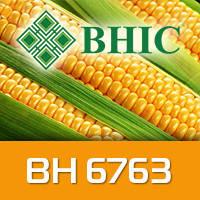 Кукуруза ВН 6763 ВНИС