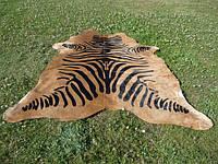 Шкура зебры, шкуры под зебру, бежевая шкура зебры, экзотические шкуры