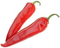 Семена острого перца Шакира F1 500 сем. Enza Zaden