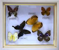 Картина с бабочками 340х290х30