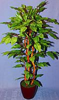 Дерево мини фикус бенджамина