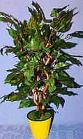 Дерево мини  2 фикус бенджамина в лимонном вазончике
