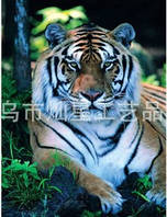 "Набор алмазной техники  ""Картина с тигром"""