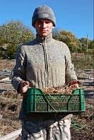 Выездной семинар по переработке органического мусора по Украине, фото 1