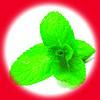 Мята / Mint 10 мл, 18 мг/мл, 50PG - PUFF Жидкость для электронных сигарет (Заправка)