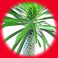 Мадагаскарский Кактус / Madagascar Cactus 10 мл, 6 мг/мл, 50PG - PUFF Жидкость для электронных сигарет (Заправка)