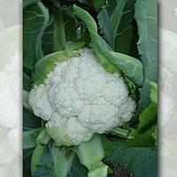 Капуста Каспер F1 семена раннего устойчивого гибрида для свежего рынка, летнего и осеннего оборота