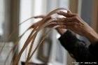 Зняття  нарощених нігтів  Салон краси «Доміно» Львiв (Сихів)