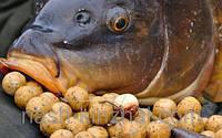 Карповые бойлы, в банке 70 штук, приманка для карпа, в наличии 48 вкусов, рыбалка, комплектующее, фото 1