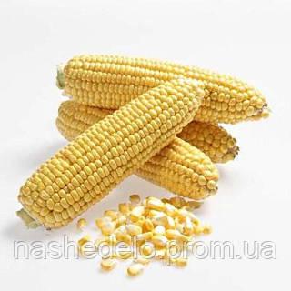 Семена кукурузы Карамелло F1 0,5 кг May Seeds