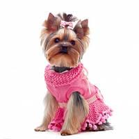 Теплая одежда для маленьких собак