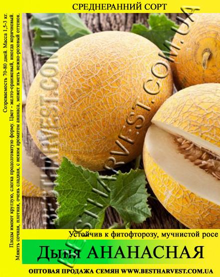 Семена дыни Ананасная 0.5 кг