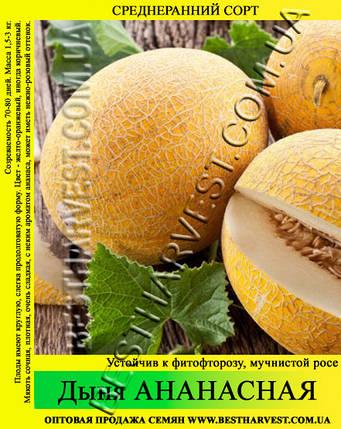 Семена дыни Ананасная 0.5 кг, фото 2