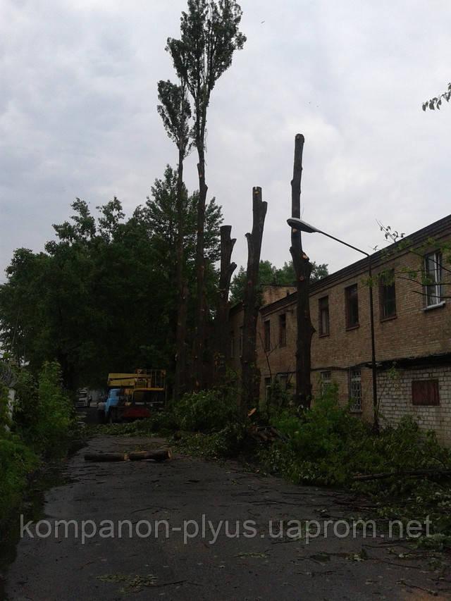 Кронирование деревьев, обрезка деревьев