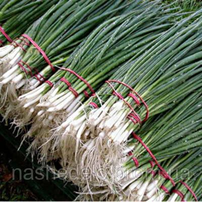 Семена лука на перо Герда 250 гр. Semo