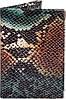 Необычная женская кожаная обложка для паспорта с тиснением под кожу змеи CANPELLINI SHI586-4ZM разноцветный