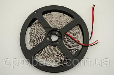LED лента белая SMD 2835 120д/м, (5 м) негерметичная