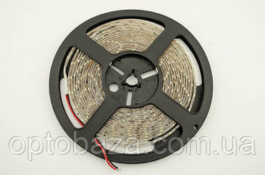 LED лента белая SMD 2835 60д/м, (5 м) герметичная