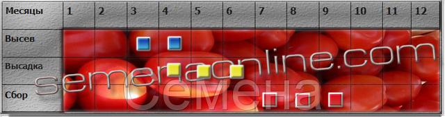 посів-збір томатів
