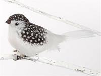 Зимняя птичка на клипсе Goodwill