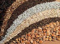 Обработка семян до посева