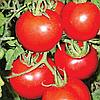 Семена томата Нептун плюс F1 20 сем. Элитный ряд