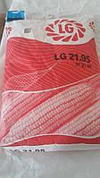 Гибрид  Лимагрейн  LG 21.95