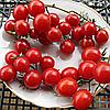 Семена томата Cиньopитa (Чeppи) F1 30 сем. Элитный ряд