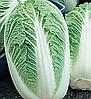 Семена пекинской капусты Пионер F1 0,5 гр. Nasko
