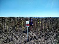 Семена подсолнечника  АС33108 НО, фото 1