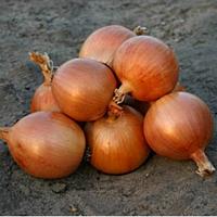 Семена лука репчатого Универсо F1 200 сем. Садыба центр