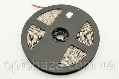 LED лента белая SMD 5050 60д/м, (5 м) негерметичная
