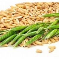 Масло семян Овса, 1 литр