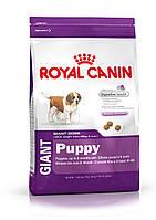 Royal Canin Giant Puppy 15кг+контейнер -корм для щенков собак очень крупных размеров