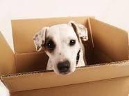 Международные авиа-перевозки домашних животных / International pet transportation by air